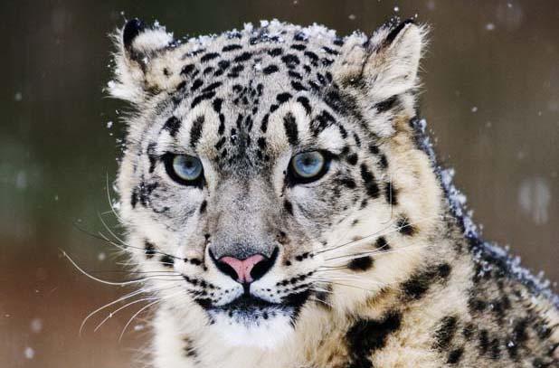 Snow Leopard Trek, Upper Dolpo
