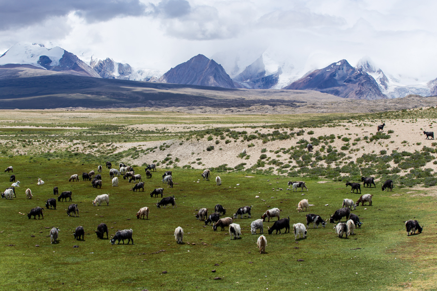 Glimpse of Tibet